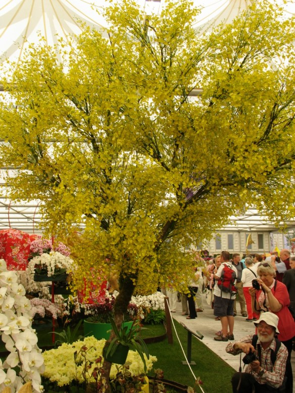Another stunning yellow 'tree' at Chelsea 2012 but this one is made from hundreds of yellow orchid flowers