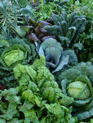 Edible or kitchen gardens are a key trend