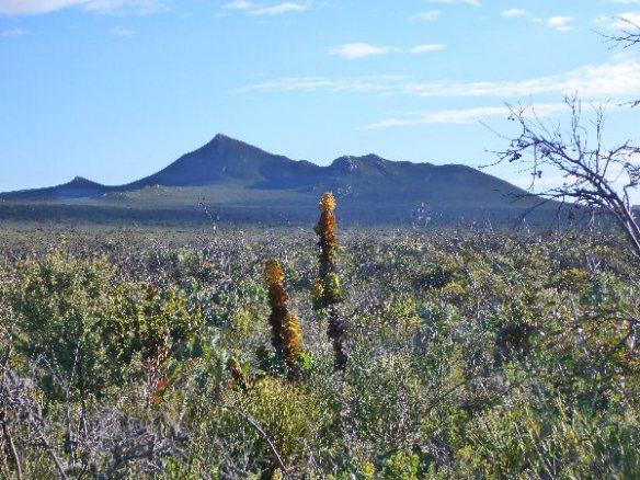 Badgingarra National Park, Western Australia
