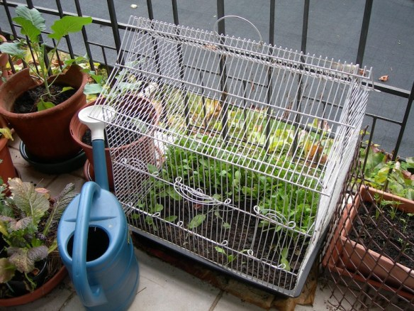 Bird cage on balcony