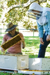 Victoria Brown, business partner Urban Beehive, Doug Purdie, director Urban Beehive inspect the bee hive at the Royal Botanic Garden, Sydney