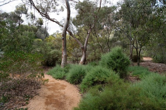 Australian Native Garden in Adelaide Botanic Gardens