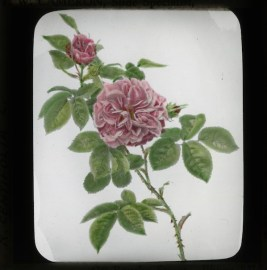 Glass Lantern Slide Burnley Collection