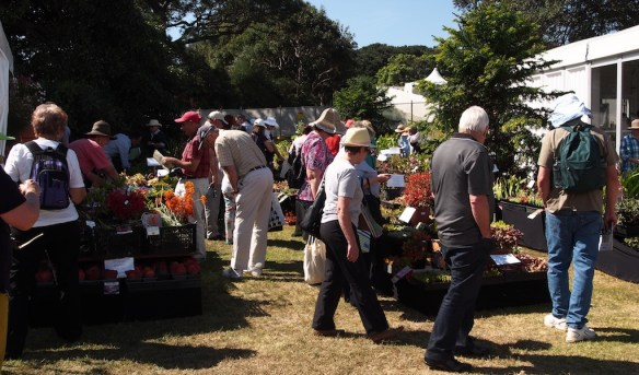 Busy buyers at Coachwood Nursery stall