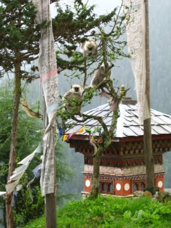 Gompa in Bhutan. Photo Jenny Stewart