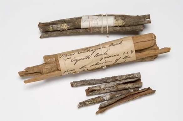Cinchona bark at Royal Botanic Gardens Kew