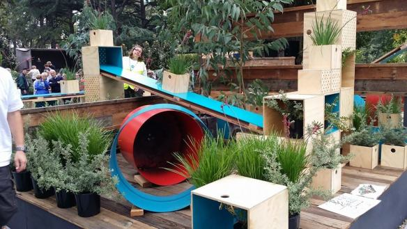 Anigozanthos Playground by Botanical Traditions