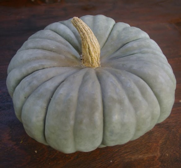 The 'Queensland Blue' is a stunning heritage pumpkin