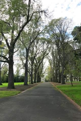 Elms in Fitzroy Gardens, Melbourne