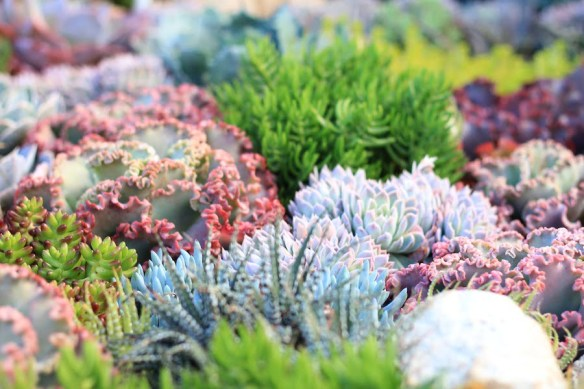 Coral garden closeup. Design Phil Withers
