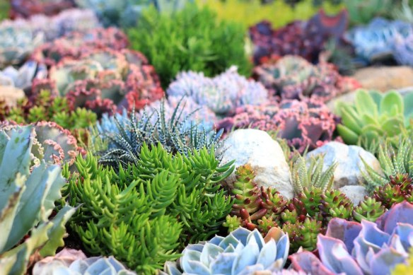Coral succulent garden AGSS 2014 Design Phil Withers