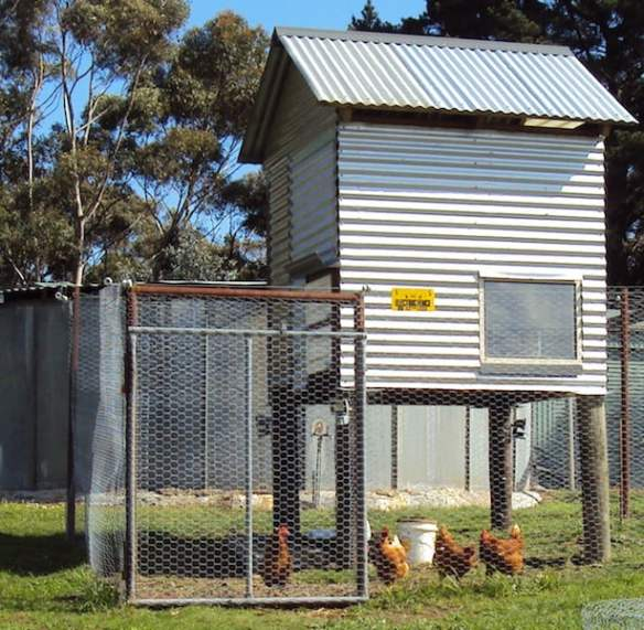 Chook shed showing 'floppy' fence