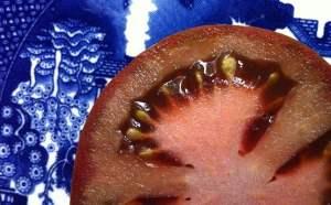 tomato brown