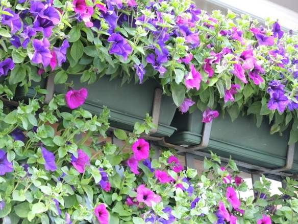 Window Boxes of the Dolomites Photo Helen McKerral05a
