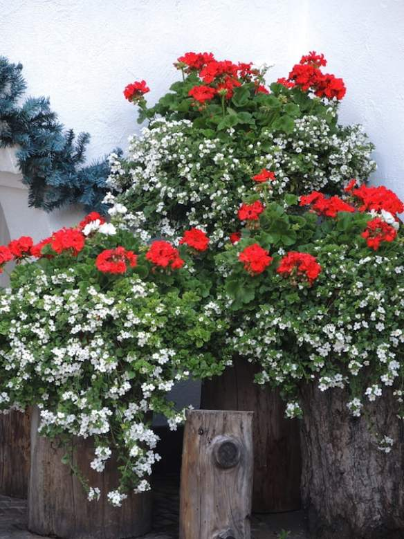Window Boxes of the Dolomites Photo Helen McKerral31
