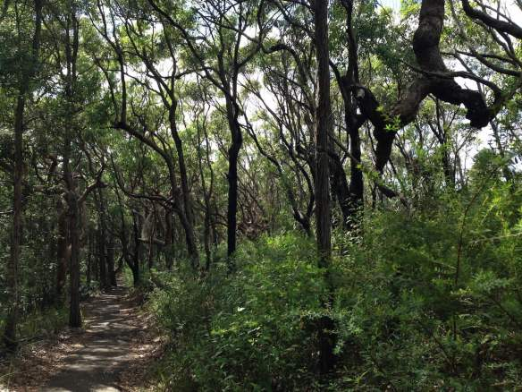 Maitland Bay Walking Track: cool, serene, beautiful. Photo: Janna Schreier