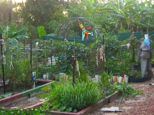 Pre-Cyclone Lam Shepherdson College's EduGrow Award winning food garden