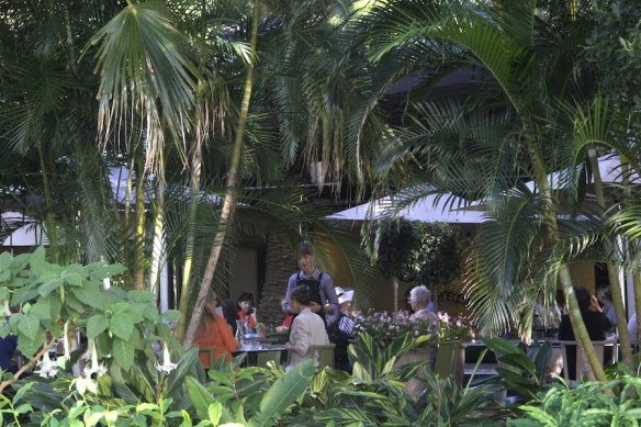 Dining on the shaded terrace of Wild Canary