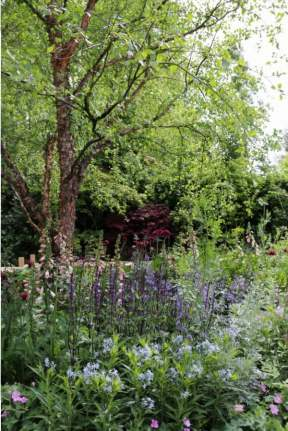 Chelsea Flower Show 2015 woodland garden Photo Fiona Ericsson