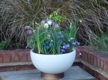 Fritillaria and spring bulbs in pot ©Stephanie Donaldson