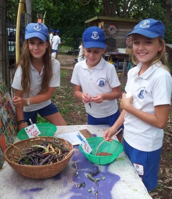 Seaforth Public School seed saving