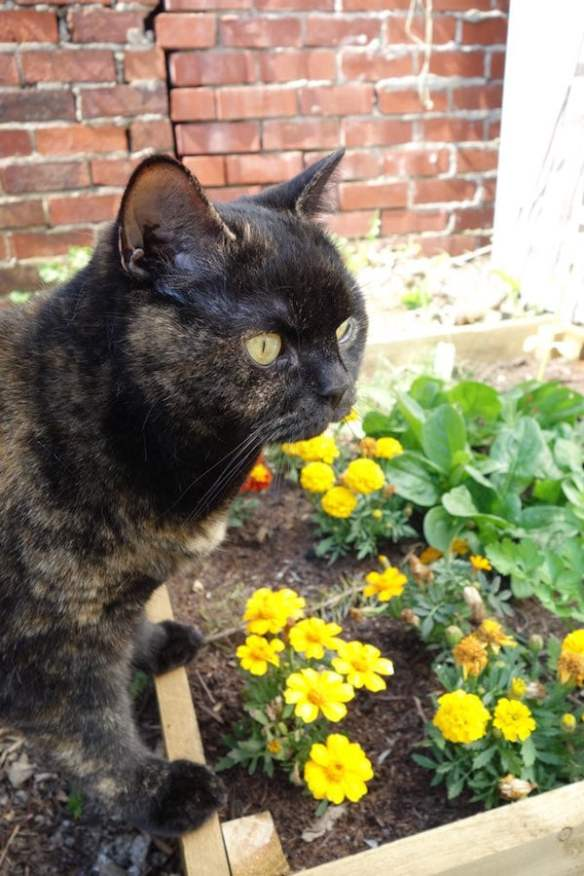 Dora surveys the vegetable garden