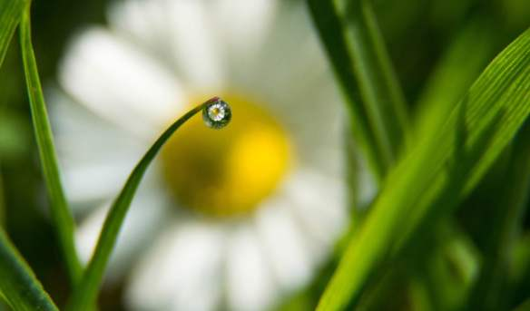 Mairi Eyres - Young Landscape Photographer of the Year - Through a water droplet, Powys, Wales