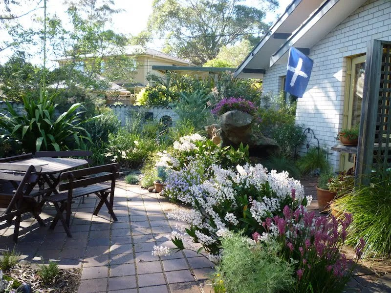 our front courtyard filled with australian native plants