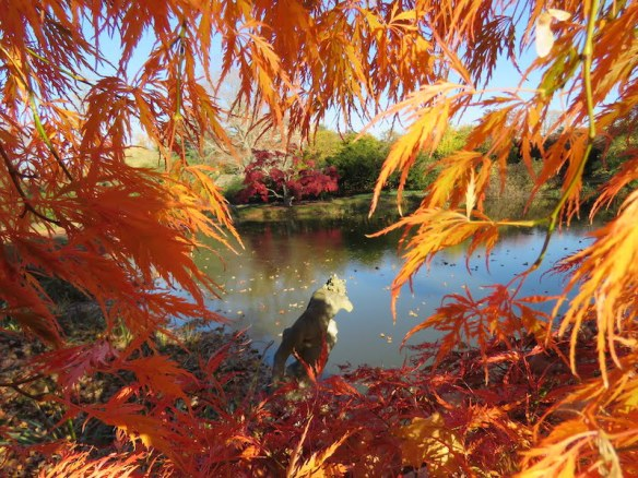 https://i1.wp.com/gardendrum.com/wp-content/uploads/2016/02/Fall-foliage-at-Old-Westbury-gardens.-Photo-Vince-Kish.jpg?resize=584%2C438