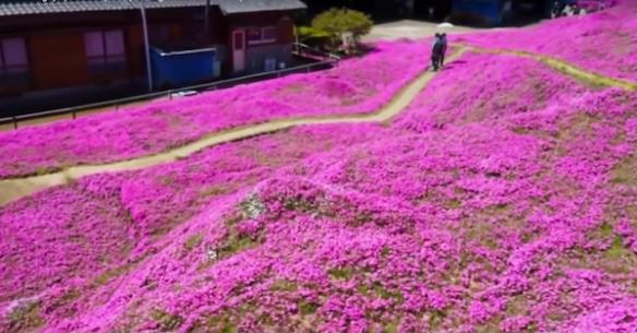 Kuroki flower garden Japan