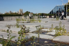 Rooftop garden at the Metropolitan Museum, New York. Art installation by Pierre Huyghe