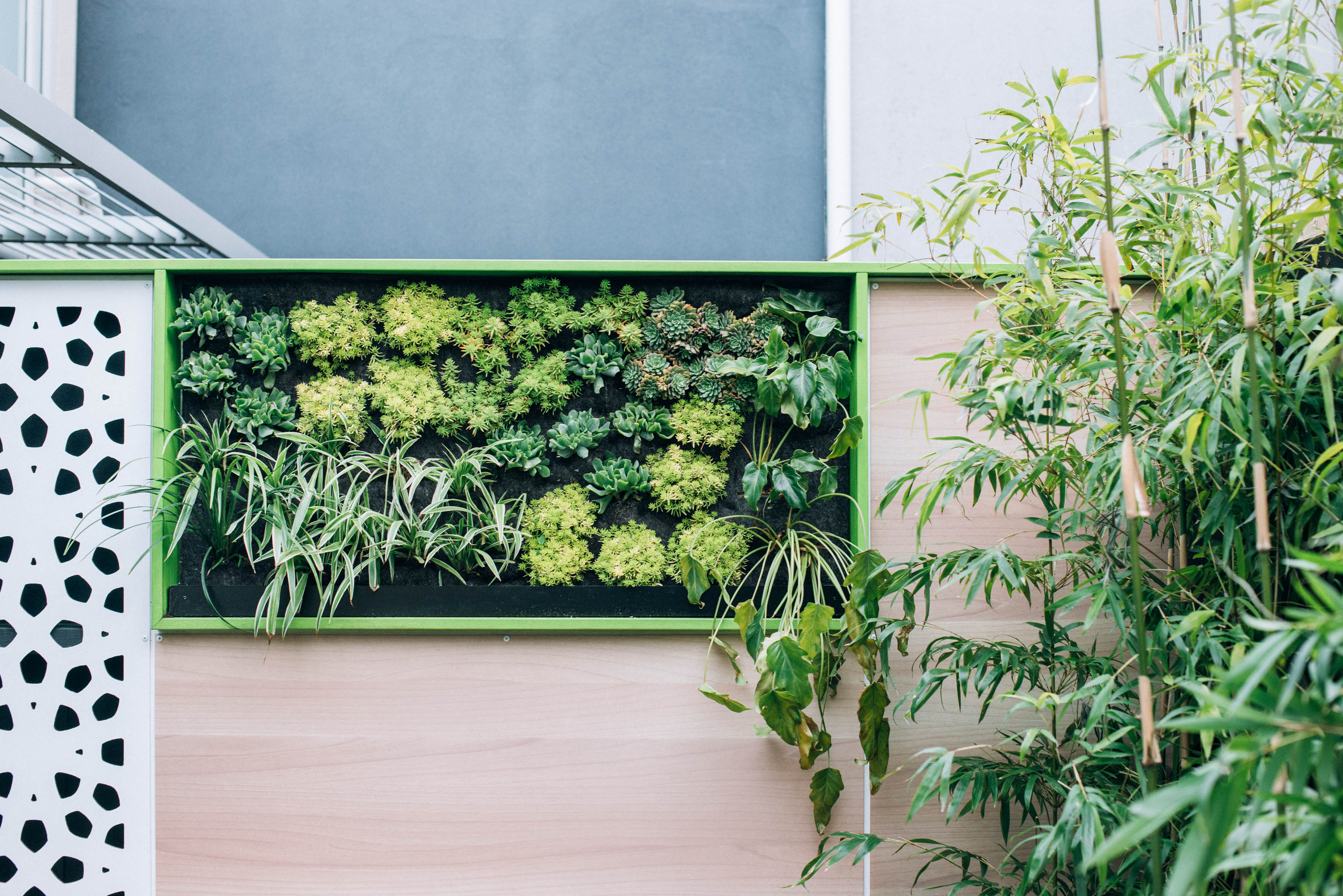 the right plants to choose for a vertical garden gardendrum