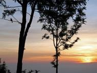 This area is known for glorious sunrises, here with the silhouette of a Red-whiskered Bulbul in the silky oak (Grevillea robusta) at Coonoor, Nilgiri Hills