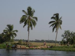 Just one more bag of rice. Paddy fields with local transportation. Kerala backwaters.