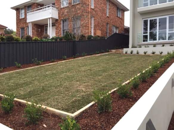 Lawn and buxus edging