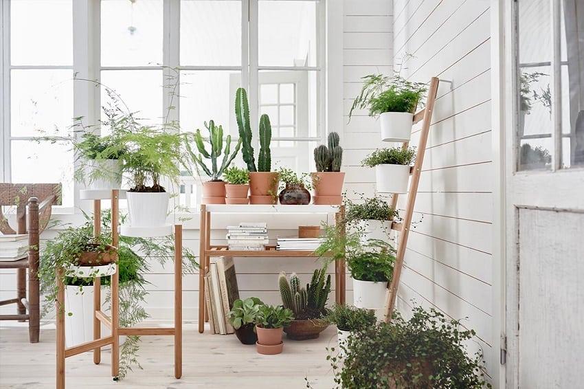 5-errores-plantas-interior-gardeneas