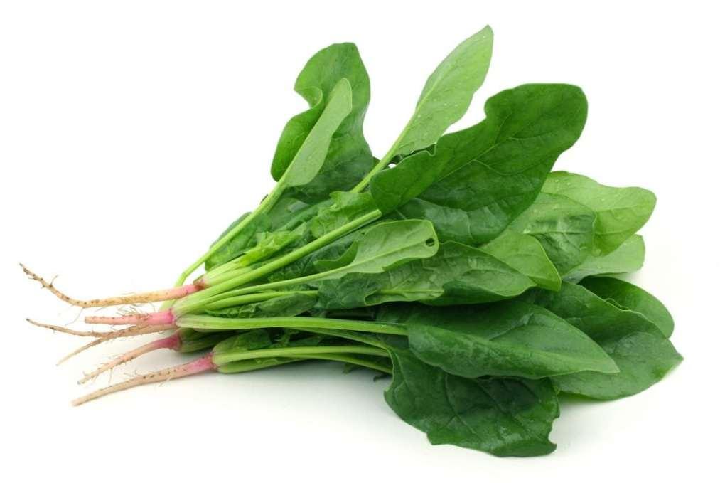 9 vegetales que plantar en enero espinacas