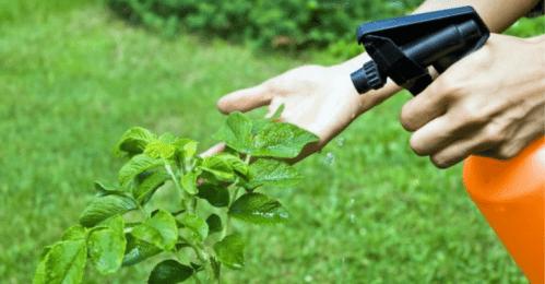 hongos-gardeneas-portada