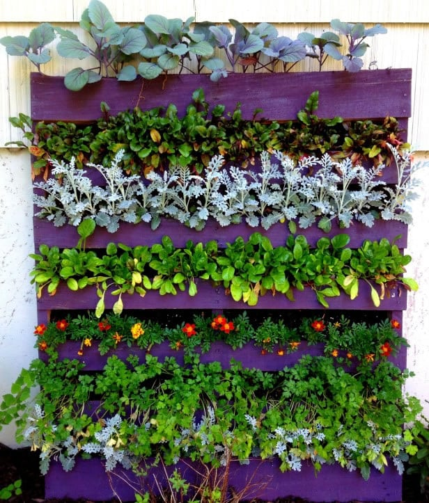 jardin-vertical-gardeneas-agua