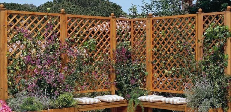 celosia-separacion-gardeneas