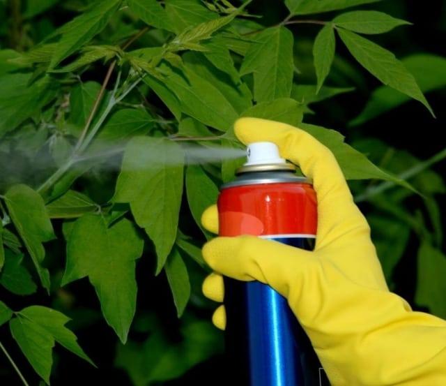 diccionario-jardineria-gardeneas-insecticidas