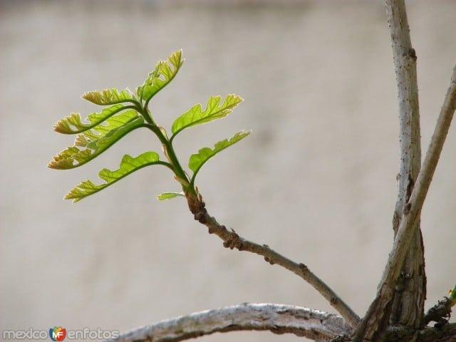 diccionario-jardineria-gardeneas-retoño