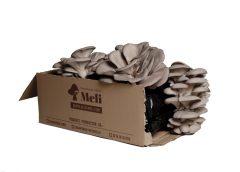cultiva setas ostra en casa con las alpacas de setas ostra