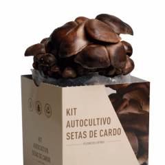 kit-autocultivo-setas-de-cardo-pleurotus-eryngii-gardeneas-2