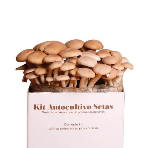 kit-autocultivo-setas-de-chopo-gardeneas