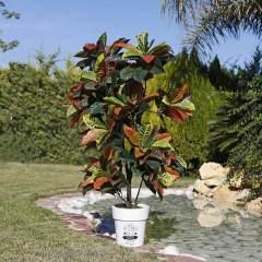 planta-artificial-croton-140-cm-74010003-3