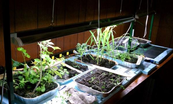 indoor gardening lights Keys to Lighting Your Indoor Gardening System - Gardenerd