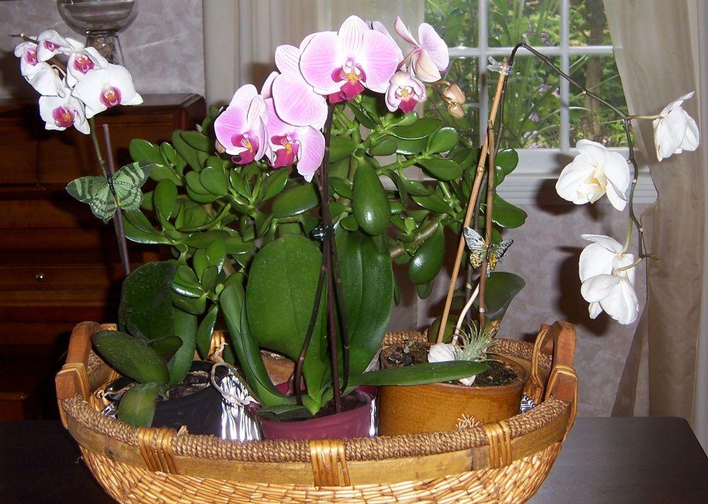Indoor Plants (1/2)