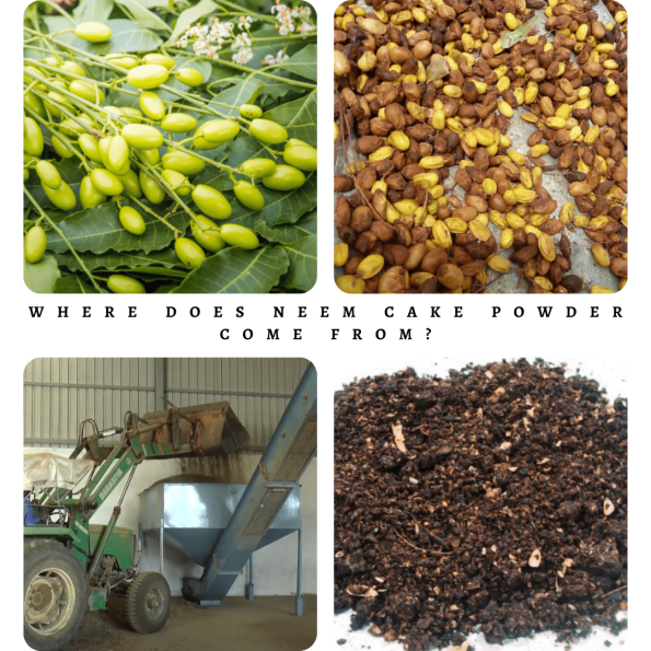 Where Does Neem cake powder Come From_-min