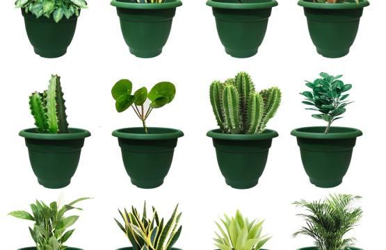 Elegance Green Planter – 7 Inch Set of 12-min